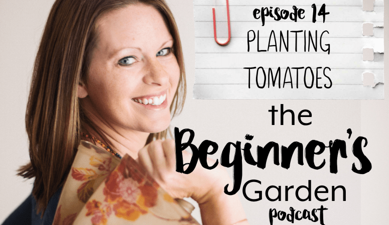 Episode 14: Planting Tomatoes