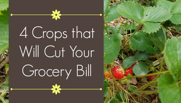 4 Crops You Can Grow that Will Cut Your Grocery Bill