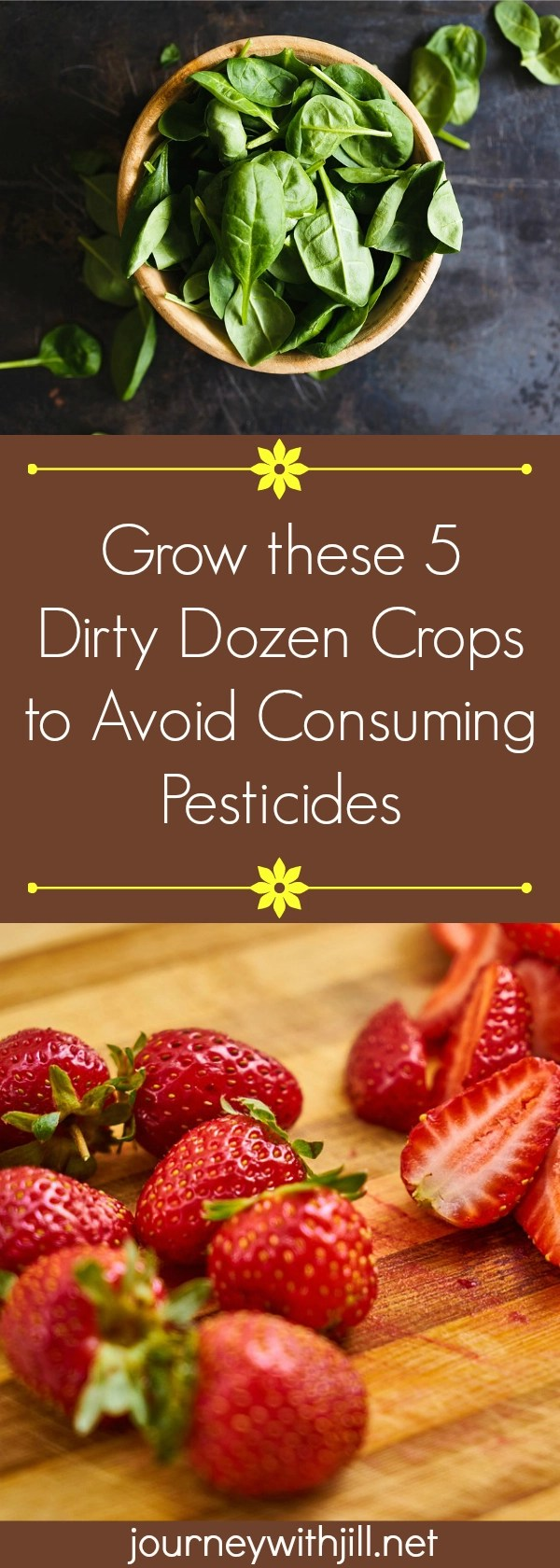 If you can't afford to purchase organic and want to limit your family's intake of pesticides, start with growing these 5 crops on the Dirty Dozen list.