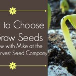 How to Choose & Grow Seeds — Interview with Mike at the White Harvest Seed Company