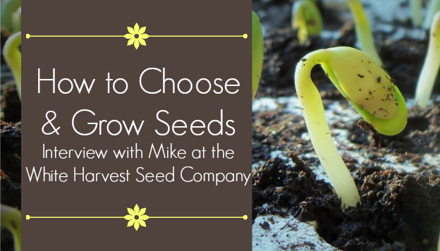 How to Choose and Grow Seeds