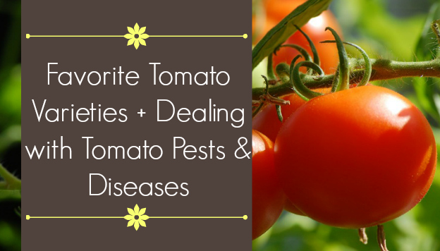 Favorite Tomato Varieties plus dealing with tomato pests and diseases