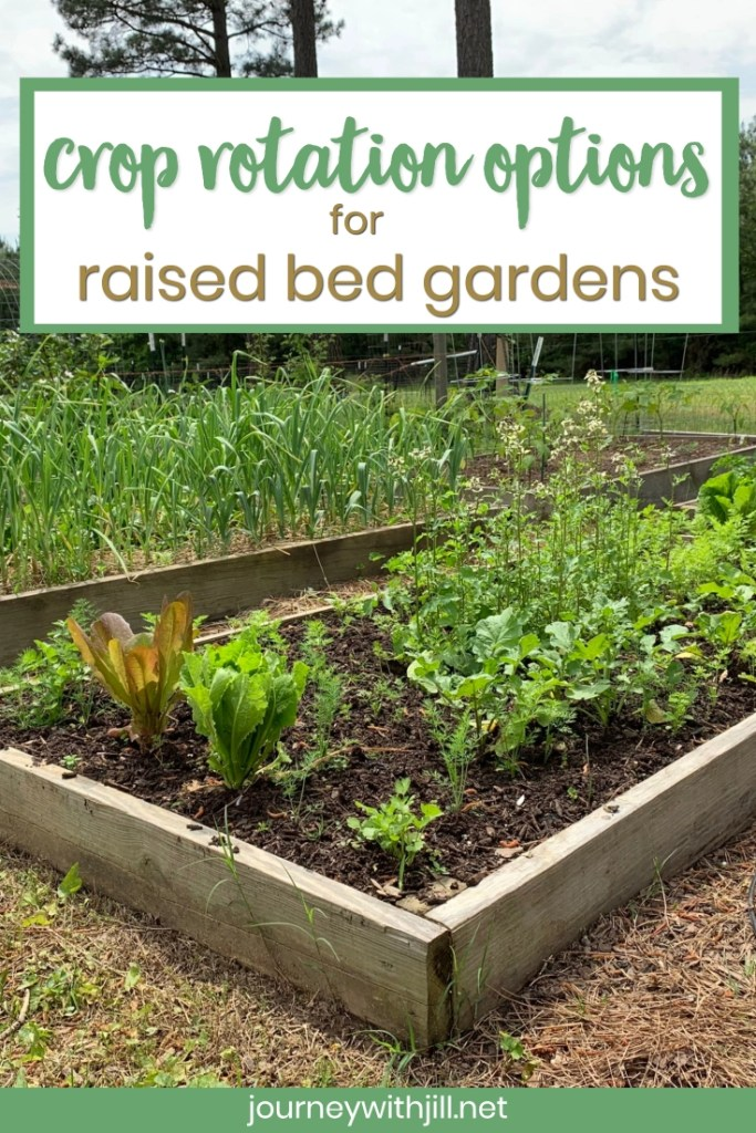 crop rotation options for raised bed gardens