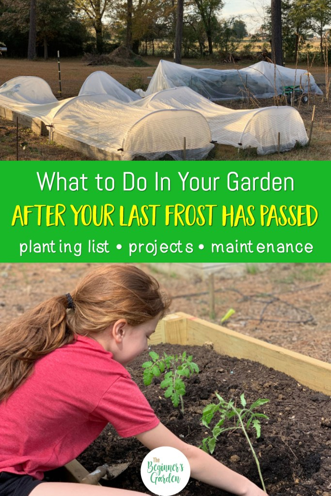 What to plant in spring? And other tasks after your last frost date.