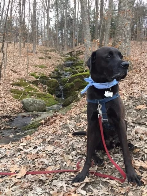 Miles next to a stream in the woods in the fall