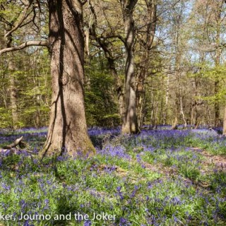 England's green spaces — 5 parks to enjoy