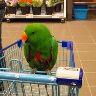 papegaai 1