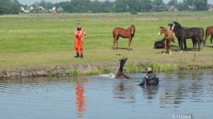 paard te water kliefdiep-1