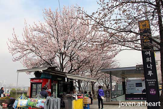 Cherry Blossoms @ Yeouinaru Station Exit 2