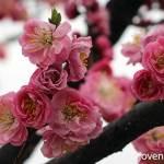 Spring @ Hangang Park, Yeouido