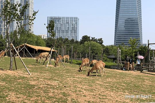 Songdo Central Park, Incheon
