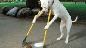 un-perro-barrendero-en-las