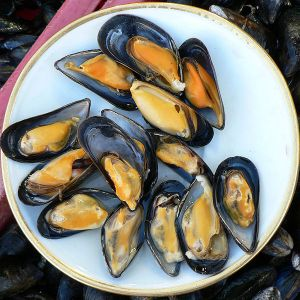 600px-Mussels_at_Trouville_fish_market