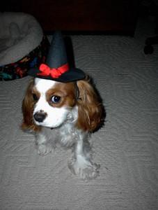 Crosby halloween