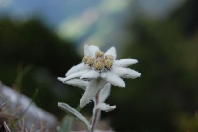 Цветочный гороскоп по дате рождения: узнайте, какой вы цветок 11