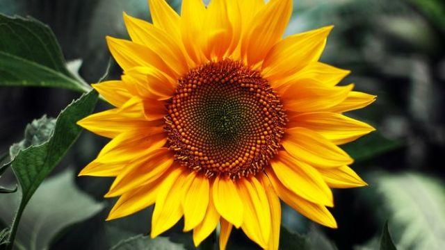 Цветочный гороскоп по дате рождения: узнайте, какой вы цветок 6