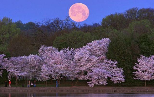 Полнолуние в мае 2021: Цветочная Луна и Суперлуние 3
