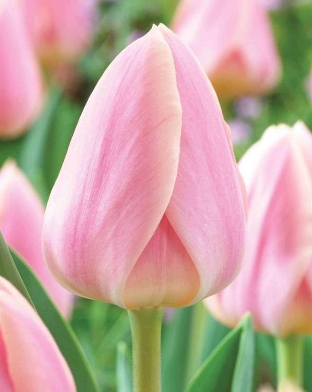 Цветочный гороскоп по дате рождения: узнайте, какой вы цветок 4
