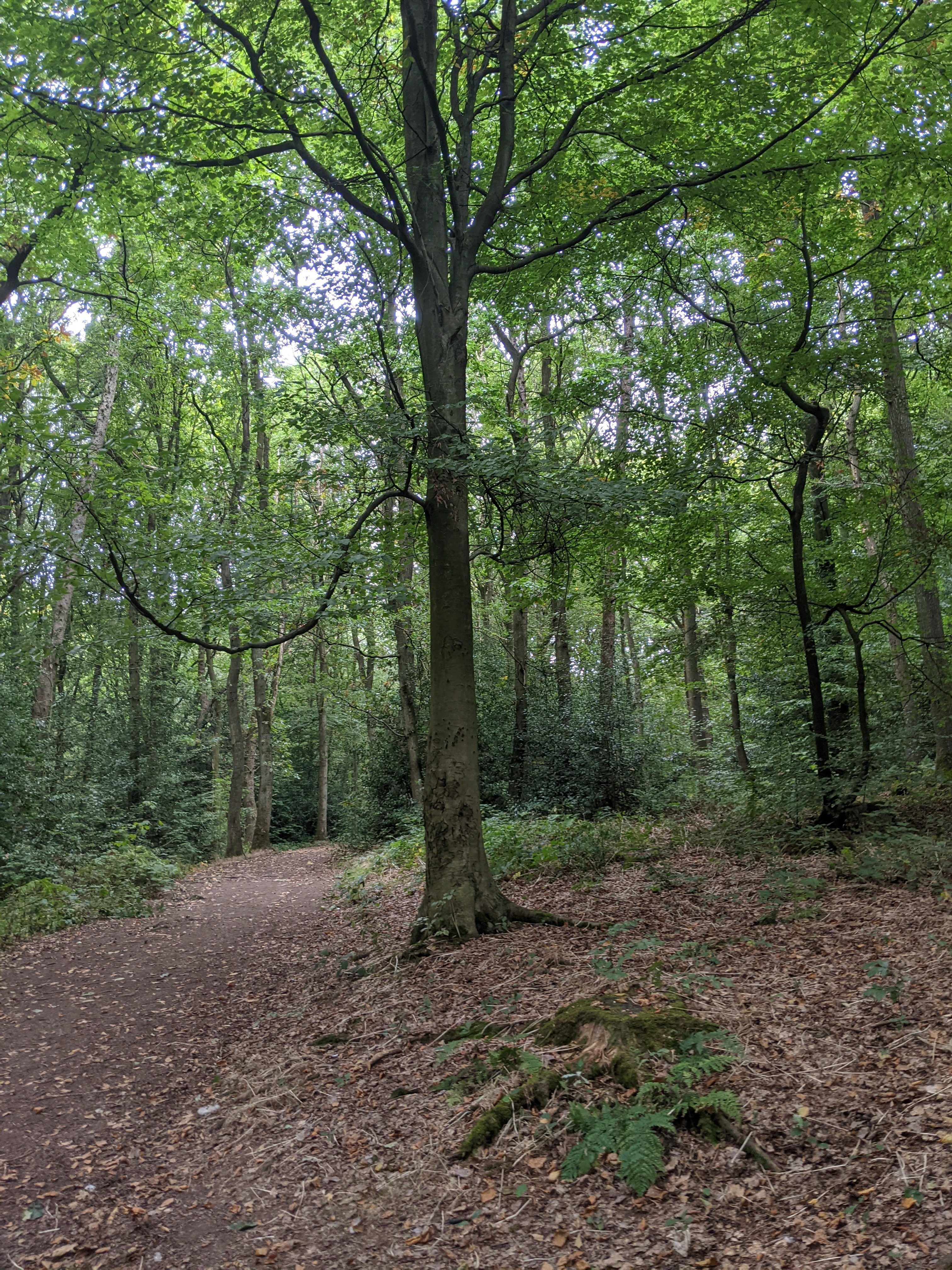 Woodland canopy 3