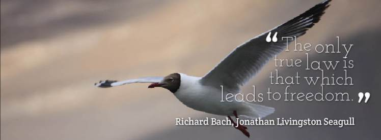 jonathan livingston seagull the only true law
