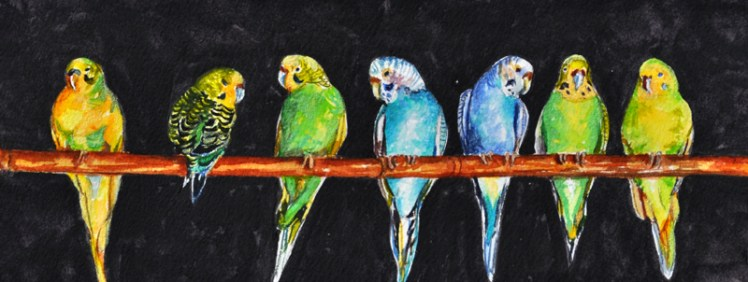7_Little_Parakeets_in_a_Row.jpg