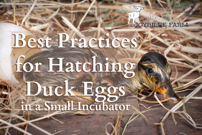 Make Small Chicken Incubator
