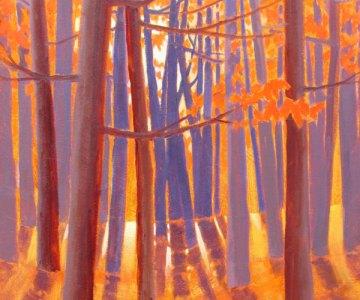 Light through Maples