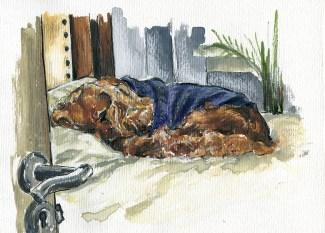 kuzco sleeping