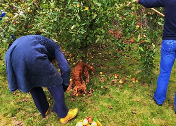 kuzco picking apples