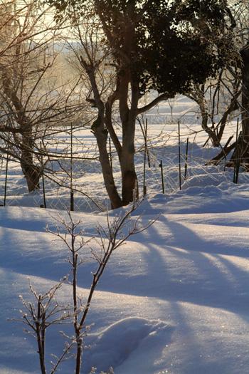 freezing-trees