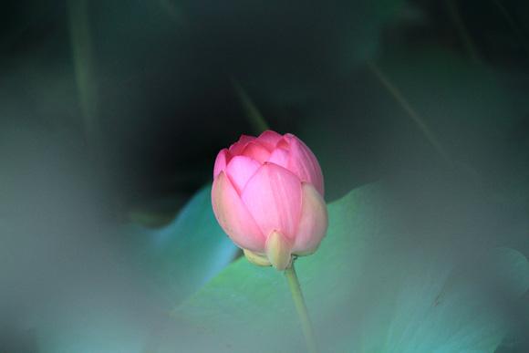 pinkuhasu1