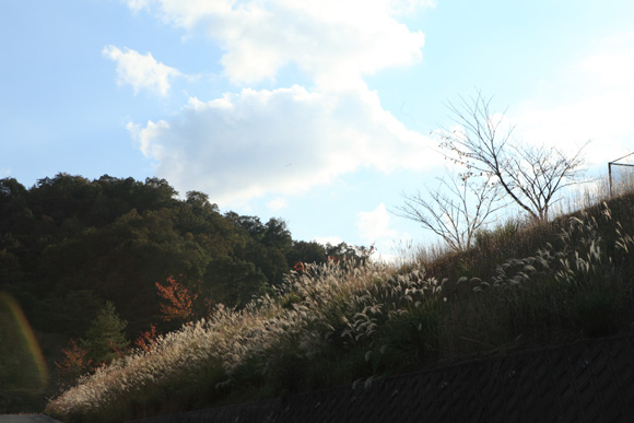 tanisusuki1