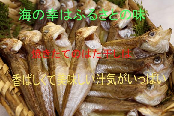 hatabosi580