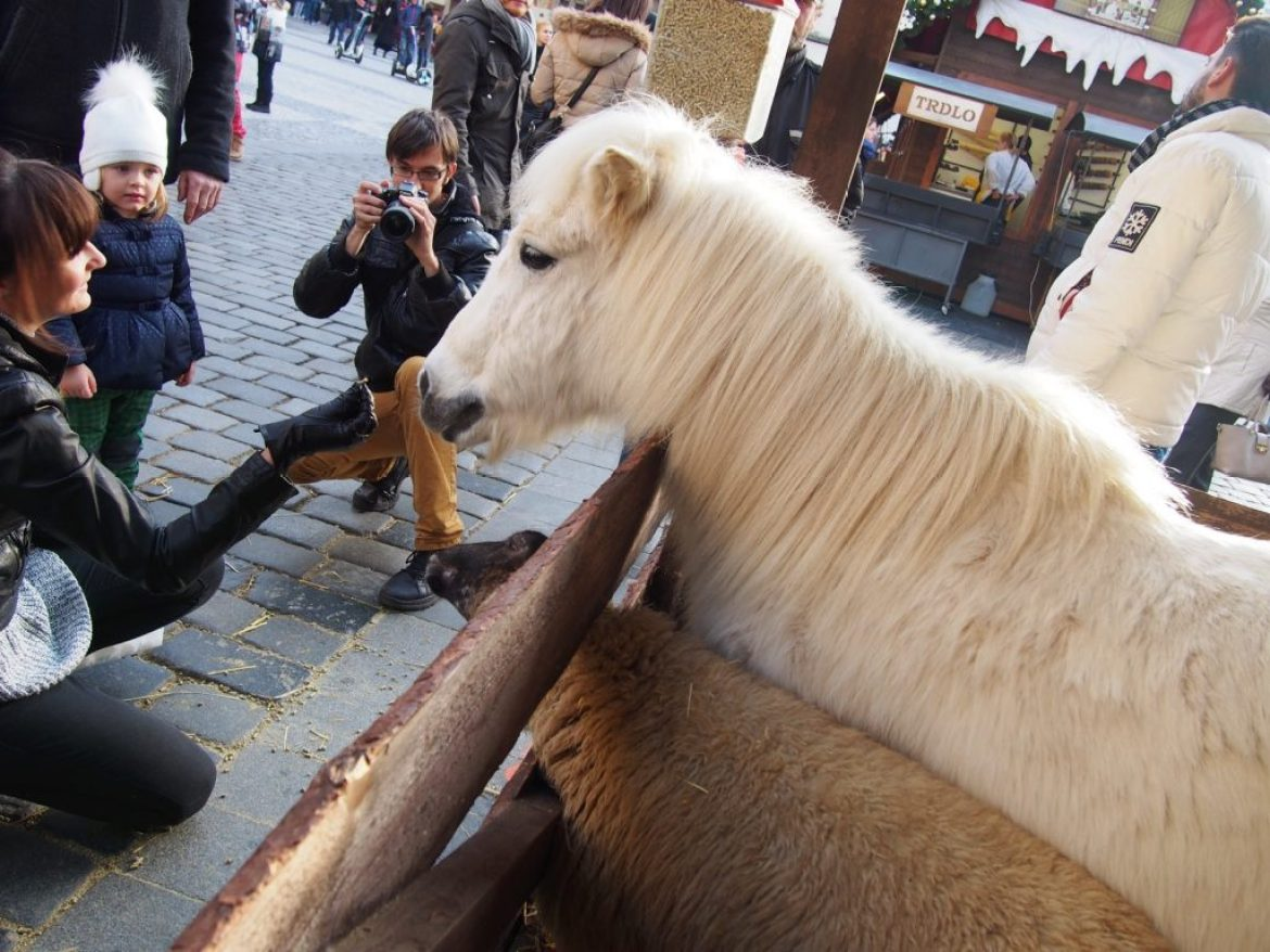 Real Animals at Prague Christmas Market