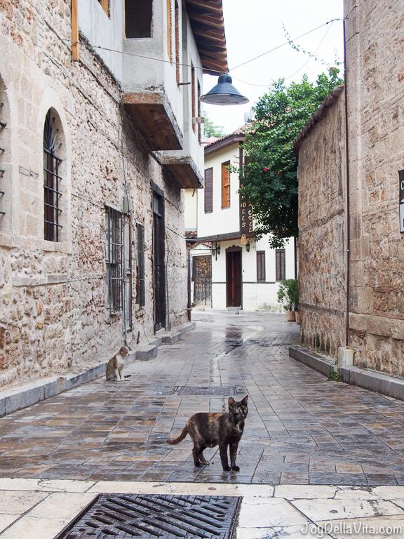 Wild Cats in Antalya