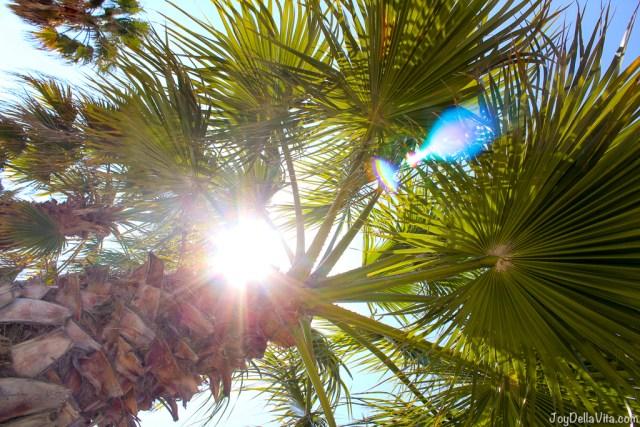 sun through palm tree near barcelona