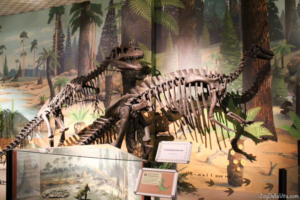 Dinosaurs at World Museum Liverpool