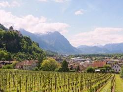 liechtenstein castle and vineyards in vaduz