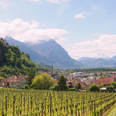 liechtenstein castle and vineyards in vaduz