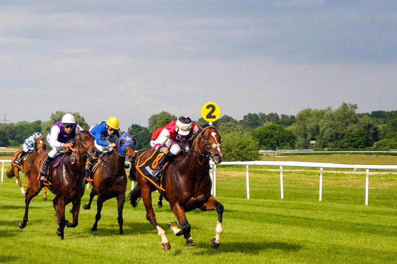 Horse Racing Image by dreamtemp from Pixabay