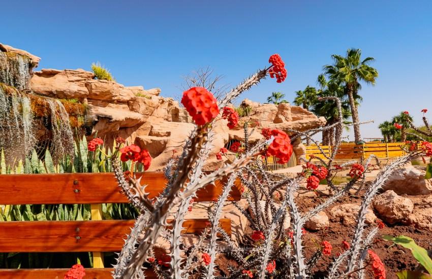 native local plants Agadir Morocco Blog Joy Della Vita