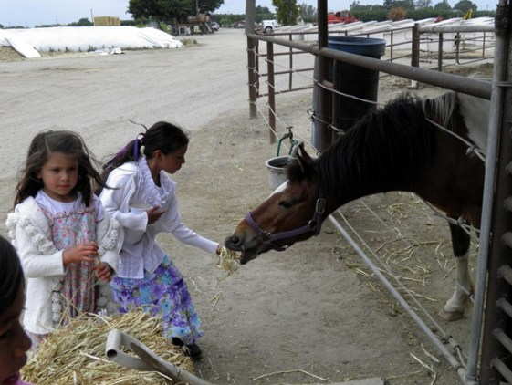 sparkles feeding horse