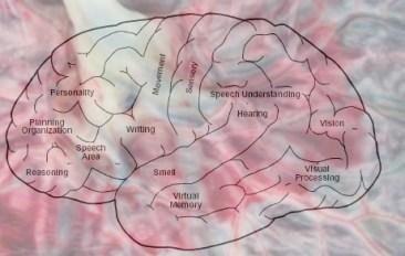 placenta brain v2