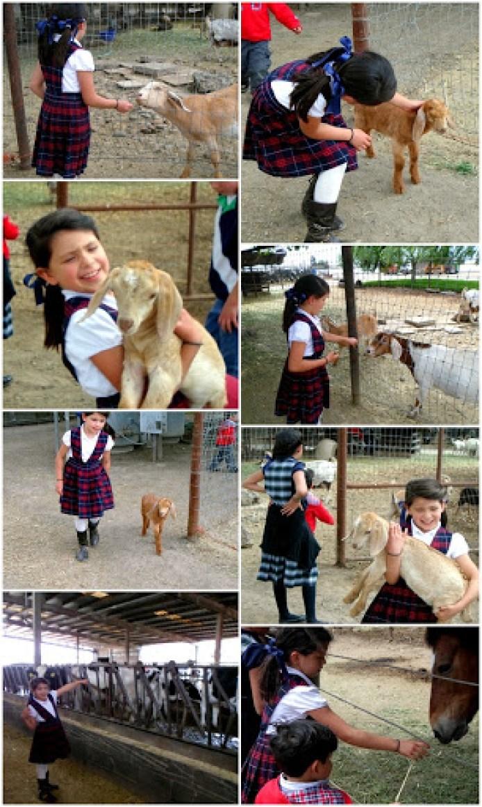 ecf3 feeding animalsv2