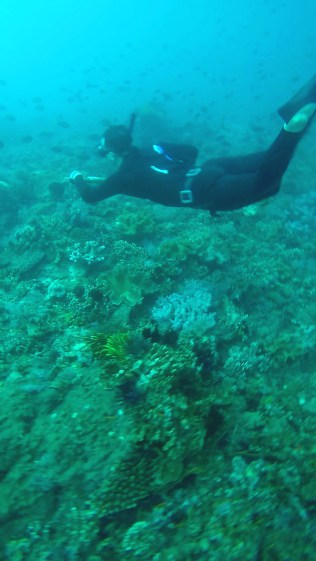 Spearfishing with Fusion FreeDiving