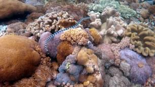 Sea snake [Nusa Penida]
