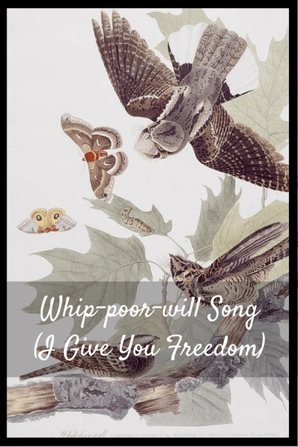 Whip-poor-will Song ( I Give You Freedom)