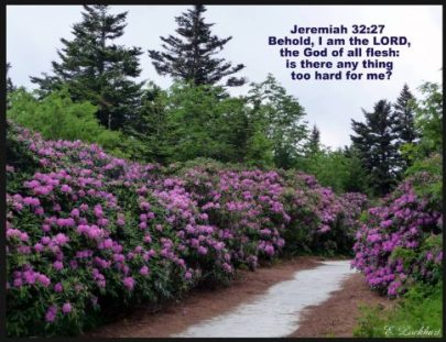 Meditate on God's Word with Scripture Wallpapers