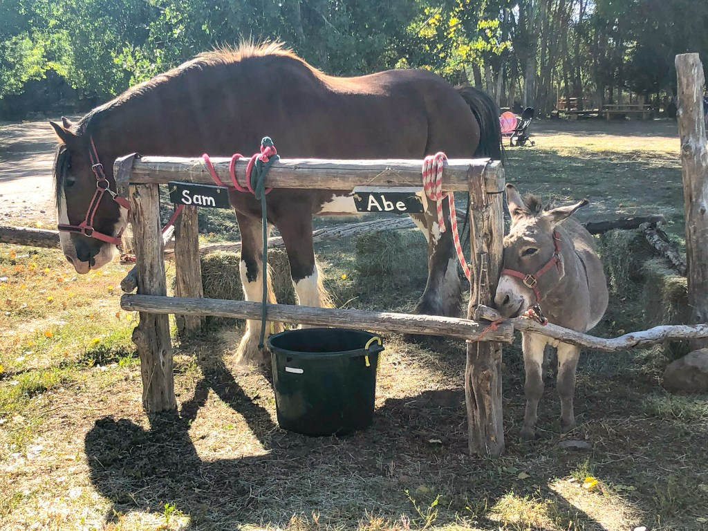 Sam the horse and Abe the donkey at the Covered Bridge Pumpkin Patch