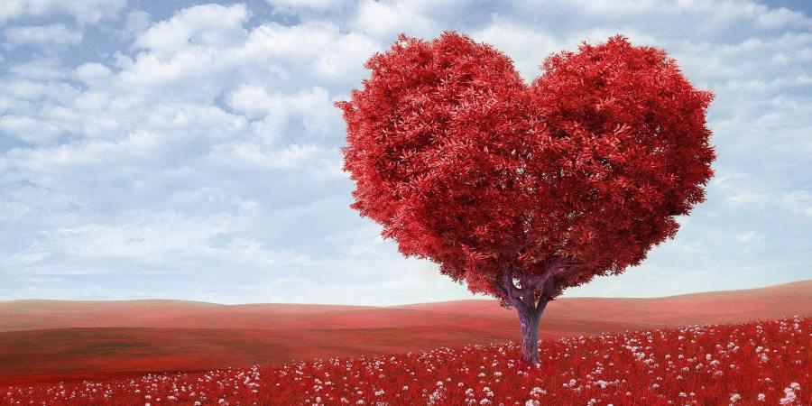heart transformed